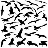 A Set of Vector Bird Silhouettes