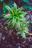 Close-up Of Beautiful Subtropical Succulent Plant Shot In Queensland, Australia In Summer poster