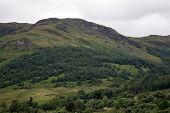 Wooded Scottish Hillside On An Overcast Summer Day poster