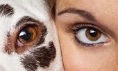 Face To Face With Dog And Human Eye poster