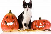 Itwo Halloween Pumpkins And A Cat