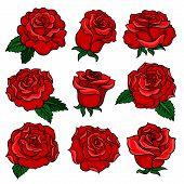 Set Of Gorgeous Red Roses. Bud Of Gorgeous Garden Flowers. Old-school Floral Tattoo. Colorful Graphi poster