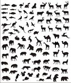 foto of zoo animals  - big collection of vector silhouettes of various animals - JPG