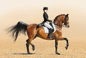 Equestrian sport - dressage (young woman and chestnut stallion)