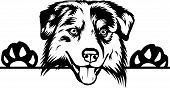 Animal Dog Australian Shepherd 6T6A.eps poster