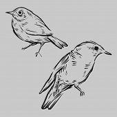 Aves da mão desenhada. Ilustração vetorial.
