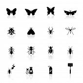 Icons set insectos
