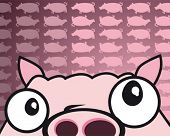 funny pig
