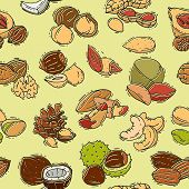 Nuts Vector Nutshell Of Hazelnut Almond And Walnut Nutrition Illustration Set Cashew Peanut And Ches poster