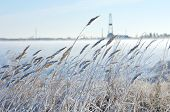 Reed in frost with a drilling derrick in the background.