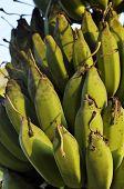 Plant Fruit Local Green Banana