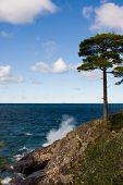 Tree On Rocky Island Cliff