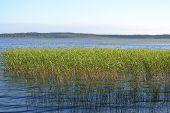 Lago Kavgolovskoe