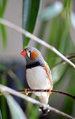Pájaro del animal doméstico