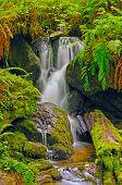 pic of trillium  - Trillium Falls in Redwood National Park in California - JPG