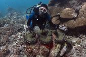 Diver & Giant Clam