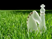 Chess Pieces In Green Grass