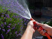 Watering The Garden On A Summer Evening