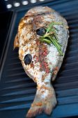 Gilthead Seabream on BBQ