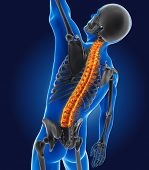 pic of spine  - 3D medical man with skeleton spine highlighted - JPG