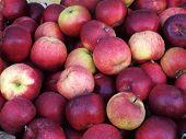 Healthy Apples Pile