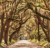 picture of backwoods  - Trees tunnel  - JPG