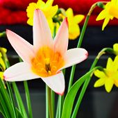 Bright colourful spring flowers