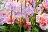 azalea mixed flowers