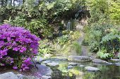 Azaleas Blooming By Waterfall