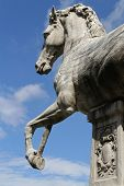 Horse on Capitoline Hill