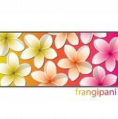 Frangipani!