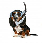 a basset hound sitting down on a white background with a mask on