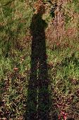 Man Shadow Autumn Nature