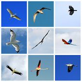 Set of flying birds