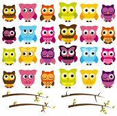 Vector Collection of Cute Owls and Seasonal Branches