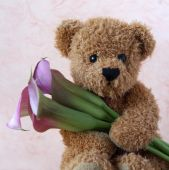 Teddy mit Calla Lilien