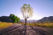 stock photo of albania  - long shadow of tree in backlight agaist violet morning - JPG