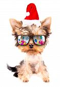 christmas dog as santa with party glasses