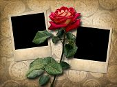 Two Old-style Photo  With Red Rose