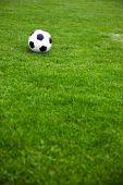 Soccer Ball On A Grassy Field