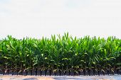 image of biodiesel  - Small palm oil plants for biodiesel production - JPG