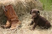 Puppy & Boots