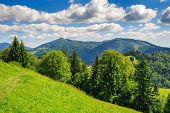 picture of coniferous forest  - coniferous forest on a steep mountain Slope - JPG