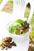 image of spinner  - Salad spinner with iceberg and red lettuce diet concept - JPG