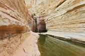 Very picturesque canyon Ein Avdat in the Negev desert. Yellow-brown canyon walls are reflected in smooth water stream Zin