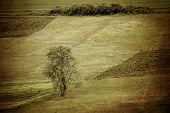 Vintage Meadows Photo