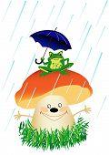 pic of baby frog  - frog on mushroom under umbrella when rain - JPG