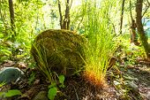Big Rock With Grass Growing Around At Forest