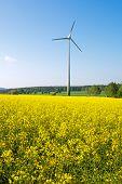 Windwheel and rapeseed field