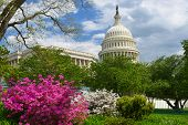 United States Capitol - Washington D.C. USA
